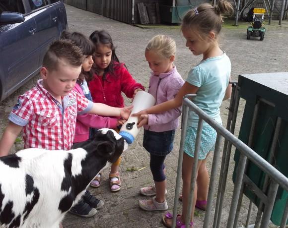 Melkveebedrijf Piet van Meintjes Hoeve