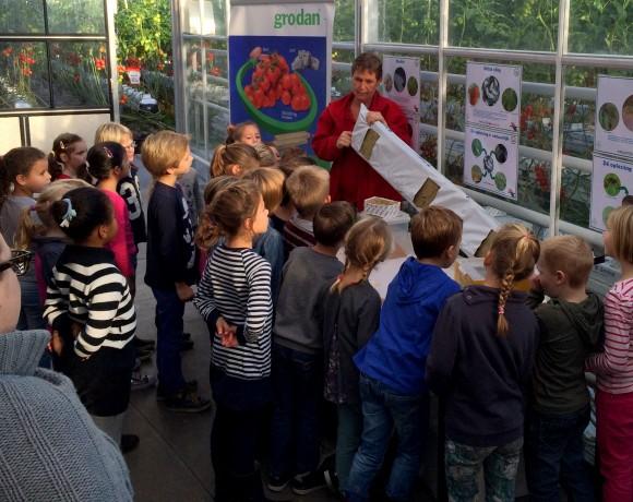 Tomatenkwekerij natuurlijktomaat.nl