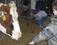 Melkveebedrijf De Scheerskamp
