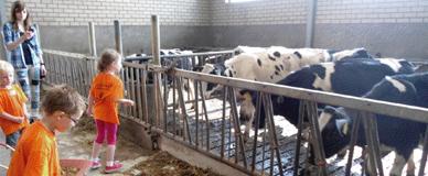 Melkveebedrijf de Ashorst