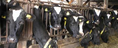 Melkveebedrijf de nieuwe Schatkuil