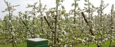 Fruitteeltbedrijf v Wagenberg