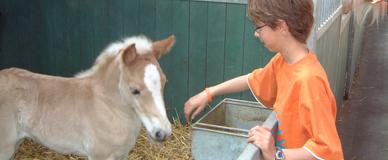 Paardenmelkerij De Edelweiss